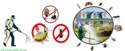 Talk to a specialist about your pest problem: Ra Dibbs