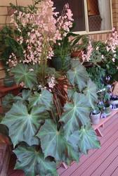 GARDEN GEAR AND PLANTS - CHEAP!