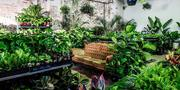 Sydney - Huge Indoor Plant Warehouse Sale - Foliage Fiesta