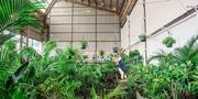 Sydney - Huge Indoor Plant Warehouse Sale - Mad Hatter's Party